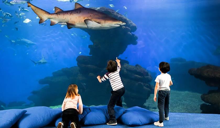 Аквариум Пальма-де-Майорка (Palma Aquarium)