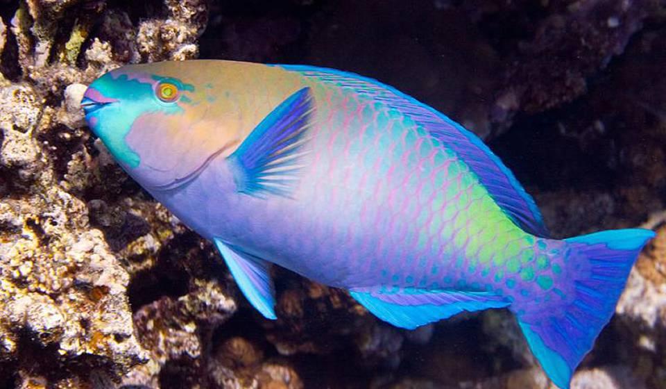 Аквариум Red Sea Life