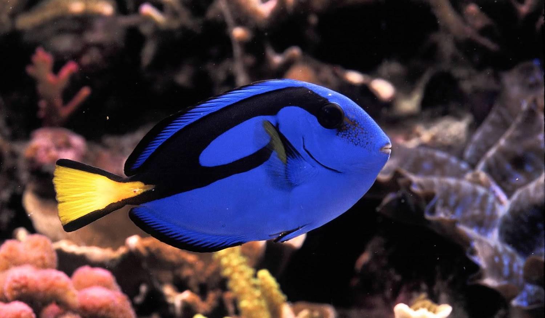 Аквариум Sea Life Benalmadena