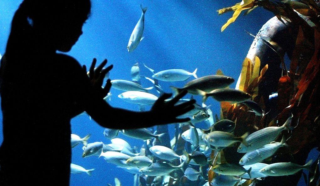 Аквариум Sea Life в Кёнигсвинтере