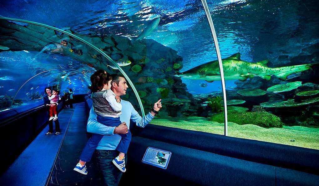 Аквариум Sea Life (Стамбул, Турция) - авторский обзор, часы работы, цены,  фото | Коллекция Кидпассаж