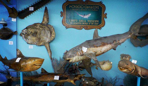 Corfu Shell Museum (ЗАКРЫТ)