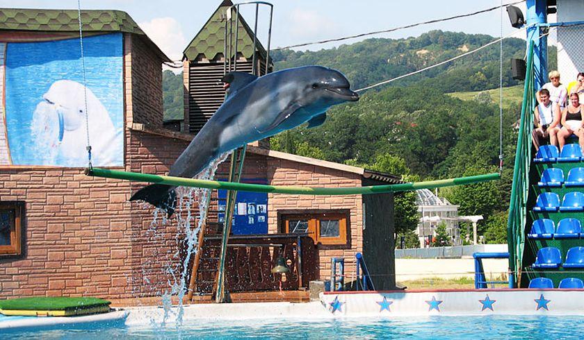 Дельфинарий Адлера