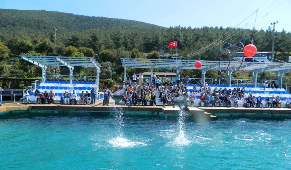 Дельфинарий Dolphin Park