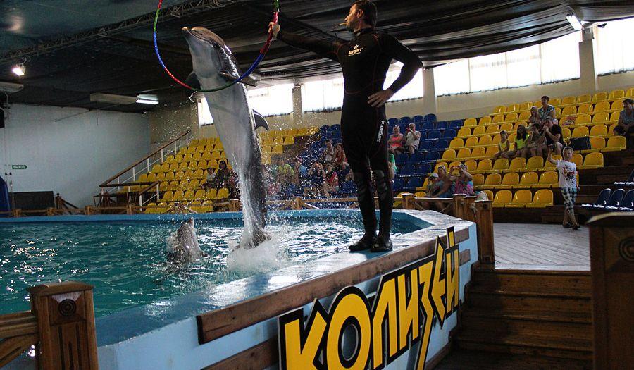 Дельфинарий Колизей