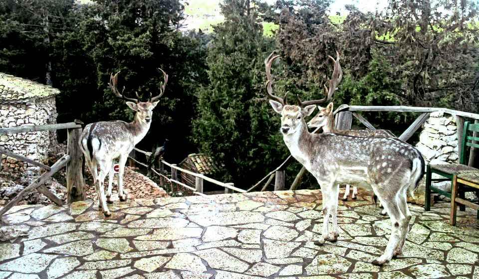 Каменный Парк Аскос