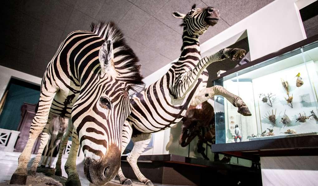 Музей Природы Goulandris