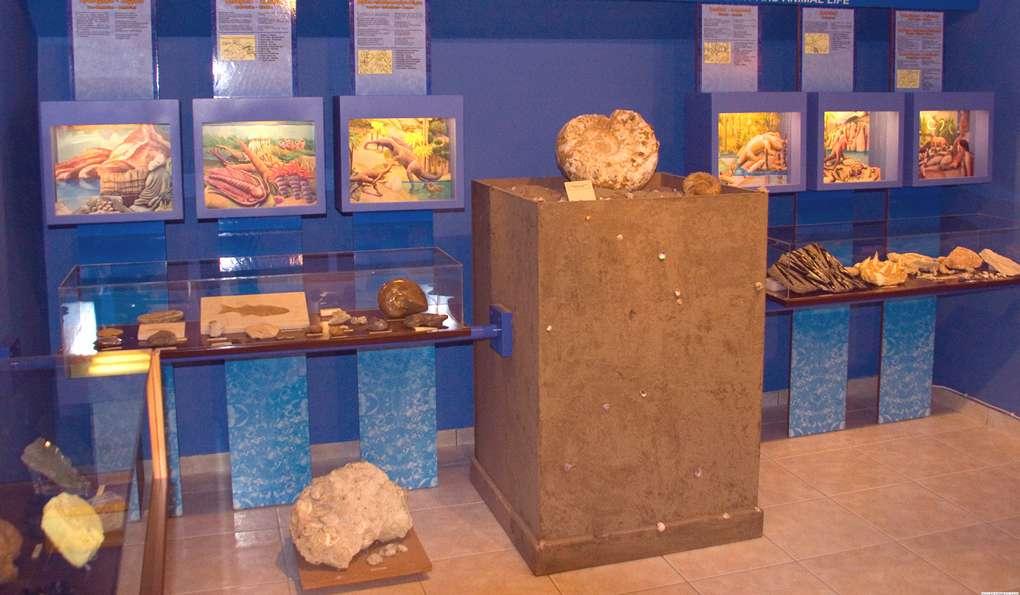 Музей Естественной Истории Хелмис