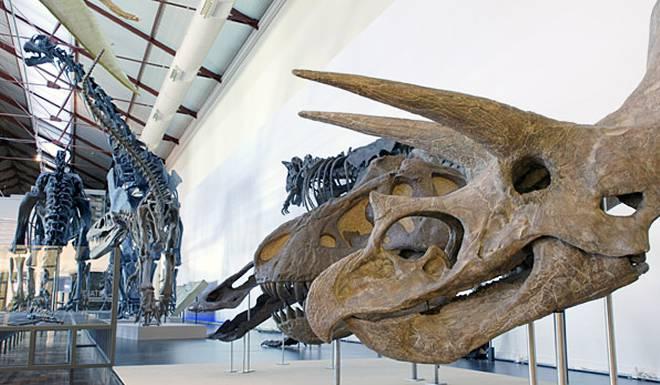 Национальный Музей Естественных Наук в Мадриде