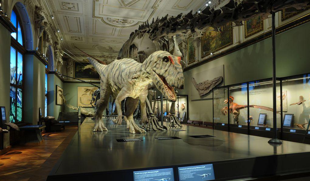 Билетов стоимость музей часы зоологический работы стоимость час в в тольятти киловатт