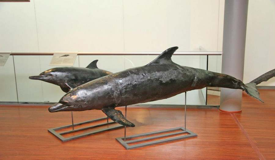 Музей Моря «Таласса»
