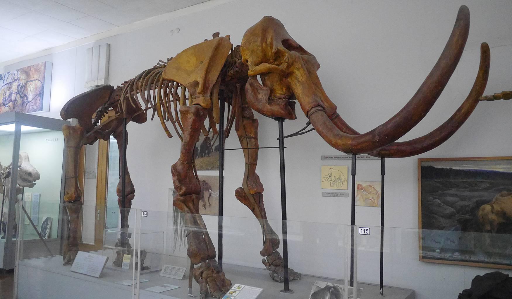 Музей Природы в Киеве