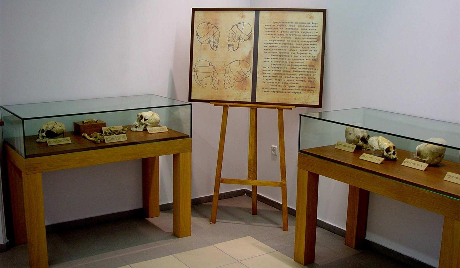 Национальный Антропологический Музей Софии