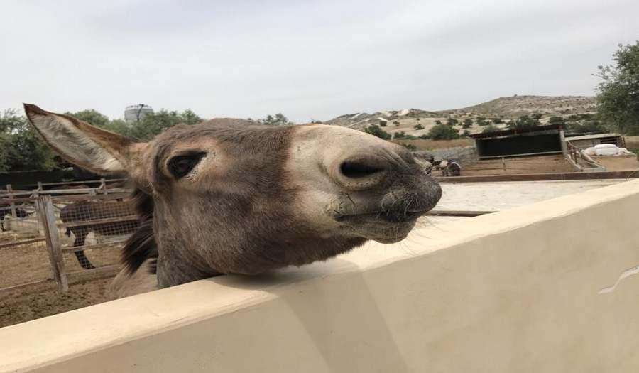 Ослиная Ферма Golden Donkey Farm