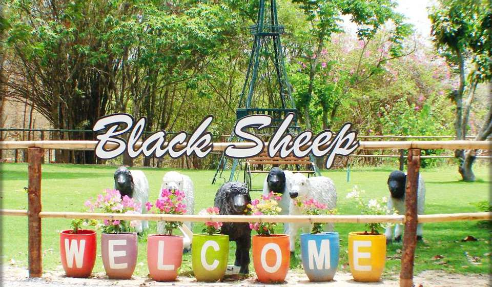Овечья Ферма Black Sheep Fun Farm
