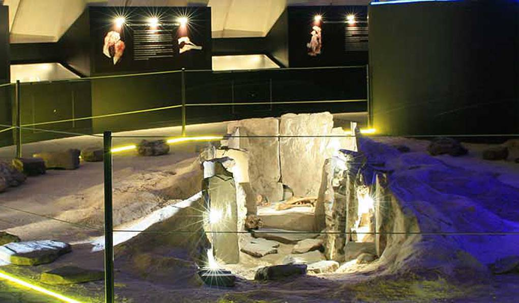 Палеонтологический Музей Эстепоны