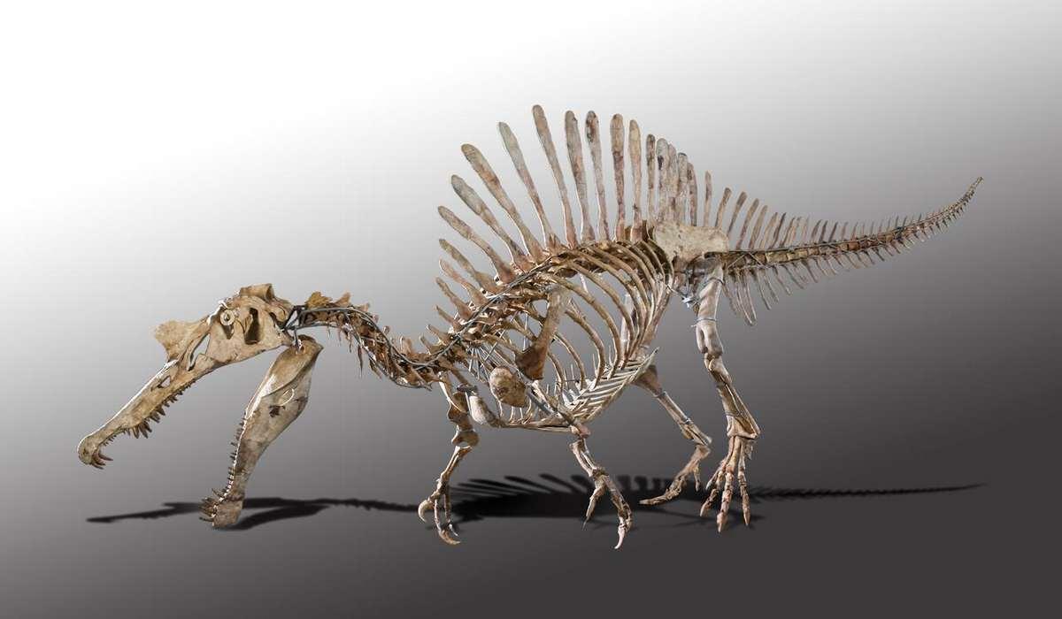Палеонтологический Музей Мюнхена