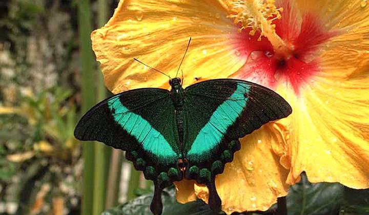 Парк Бабочек на Тенерифе