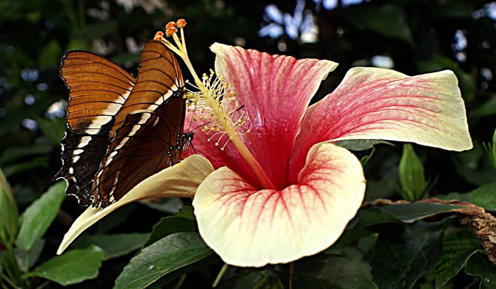 Парк Бабочек в Коста Брава