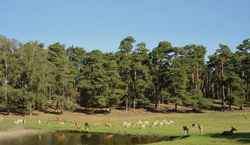 Парк Дикой Природы Johannismühle