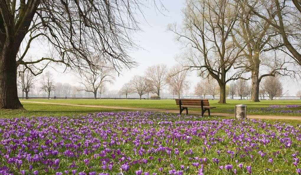 Парк Hofgarten