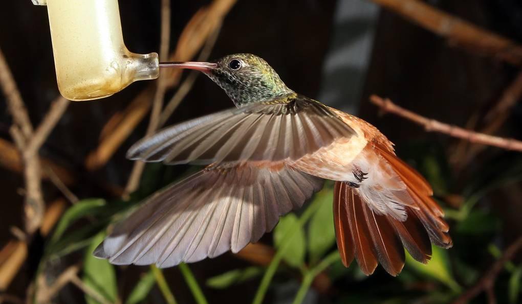 Птичий Парк Walsrode