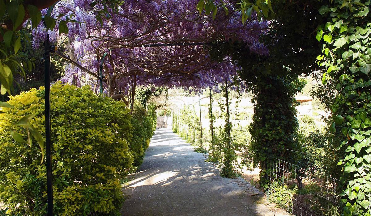 Сады Альфабия (Jardines d'Alfabia)