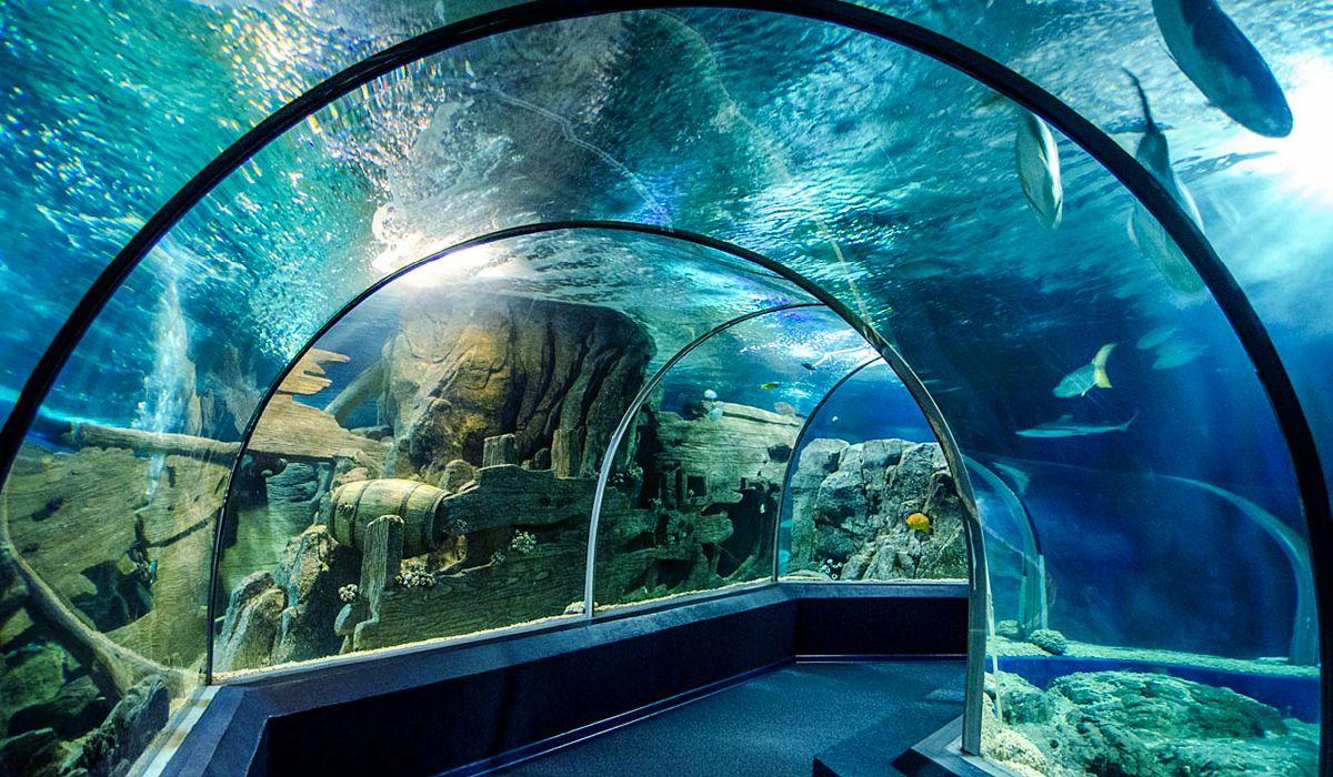 Океанариум в Адлере Sochi Discovery World Aquarium