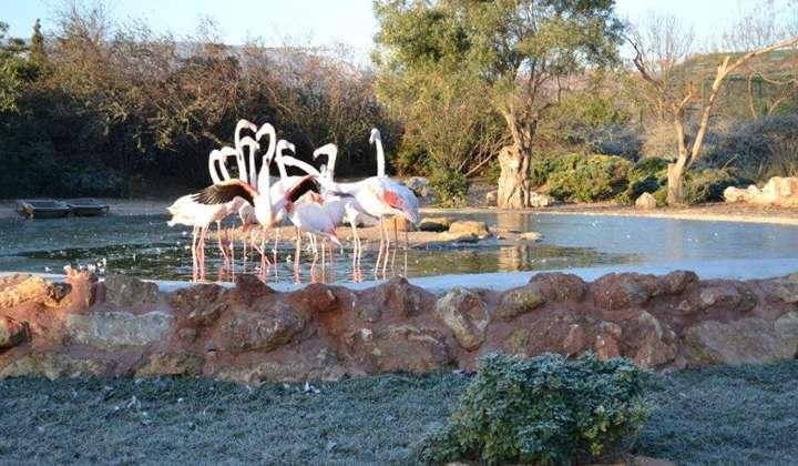 Зоологический Парк Аттики (Зоопарк Афин)