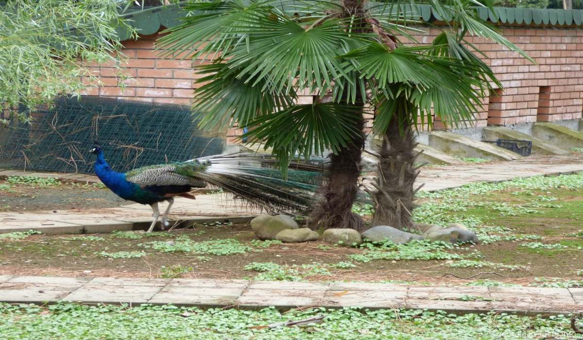Зоопарк Батуми