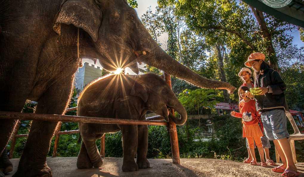 Зоопарк Дусит (ЗАКРЫТ)