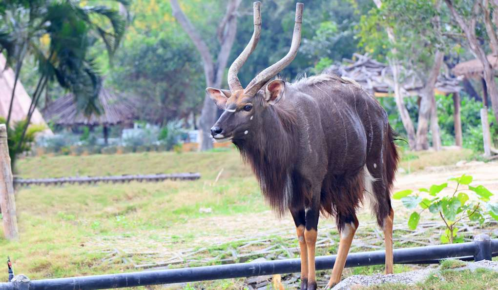 Зоопарк Кхао Кео (Khao Kheo)