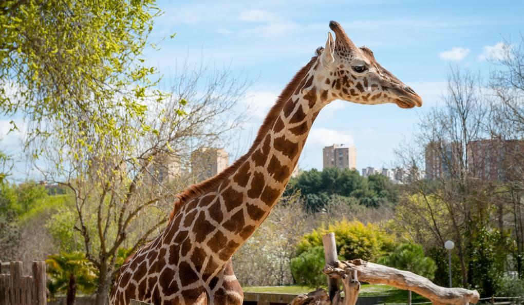Зоопарк Мадрида (Madrid Zoo)