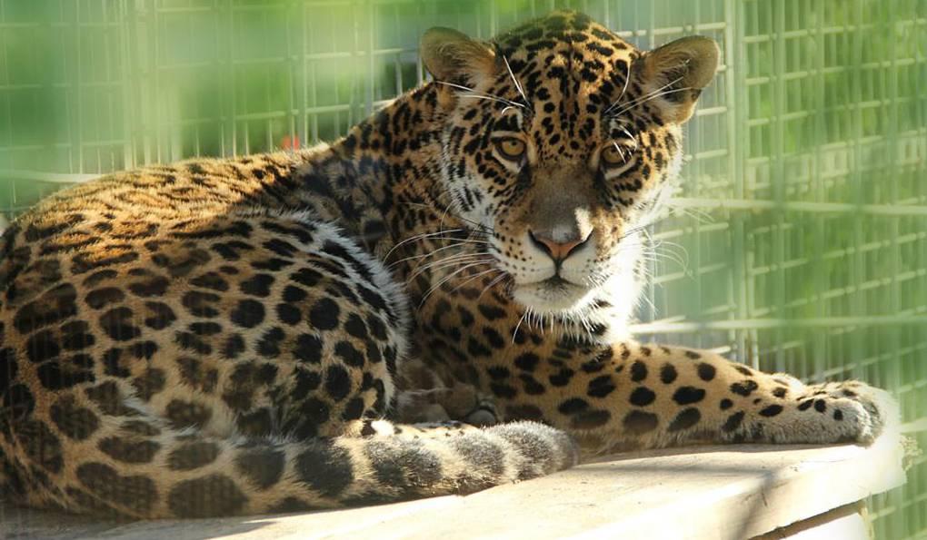 Зоопарк Севильи (Mundo Park Zoo de Sevilla)