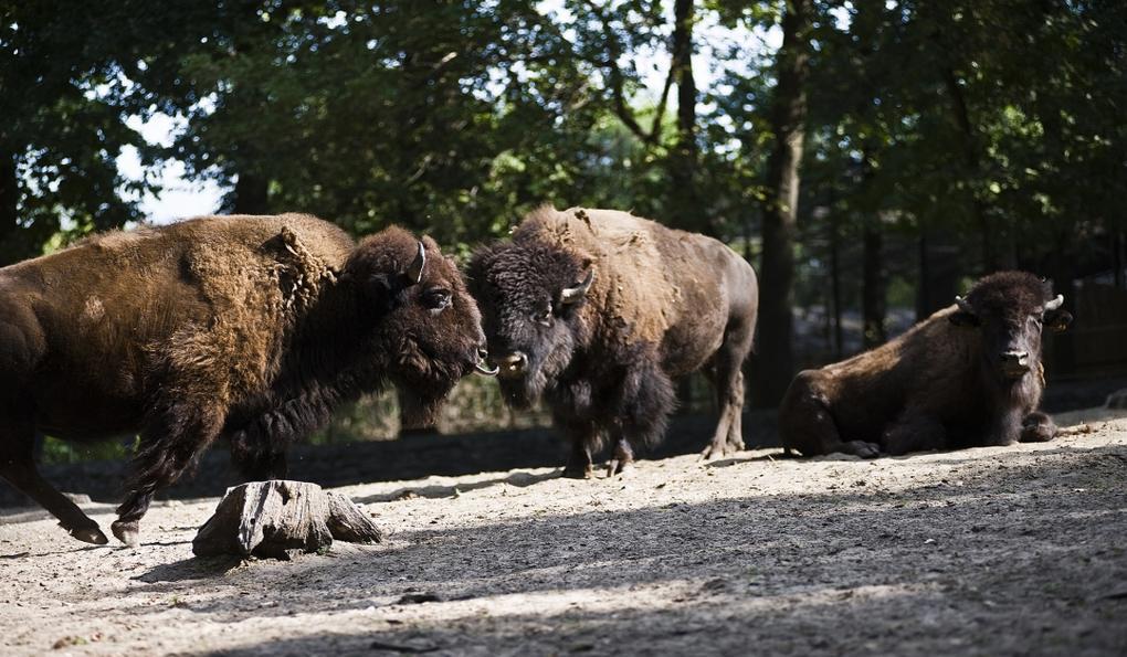 Зоопарк Шошто (Sóstó ZOO)
