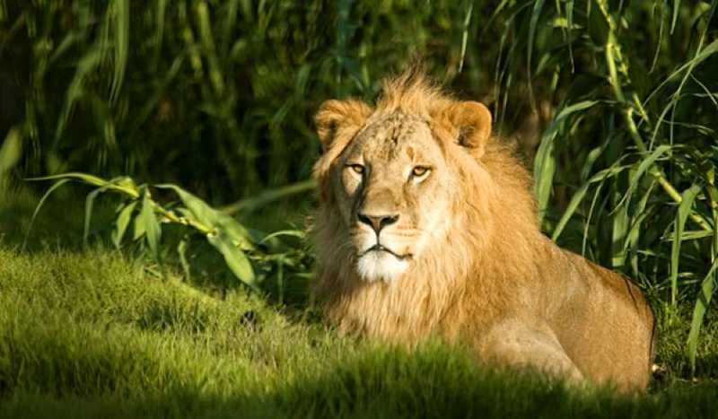 Дубай зоопарк новый недвижимость за рубежом англия
