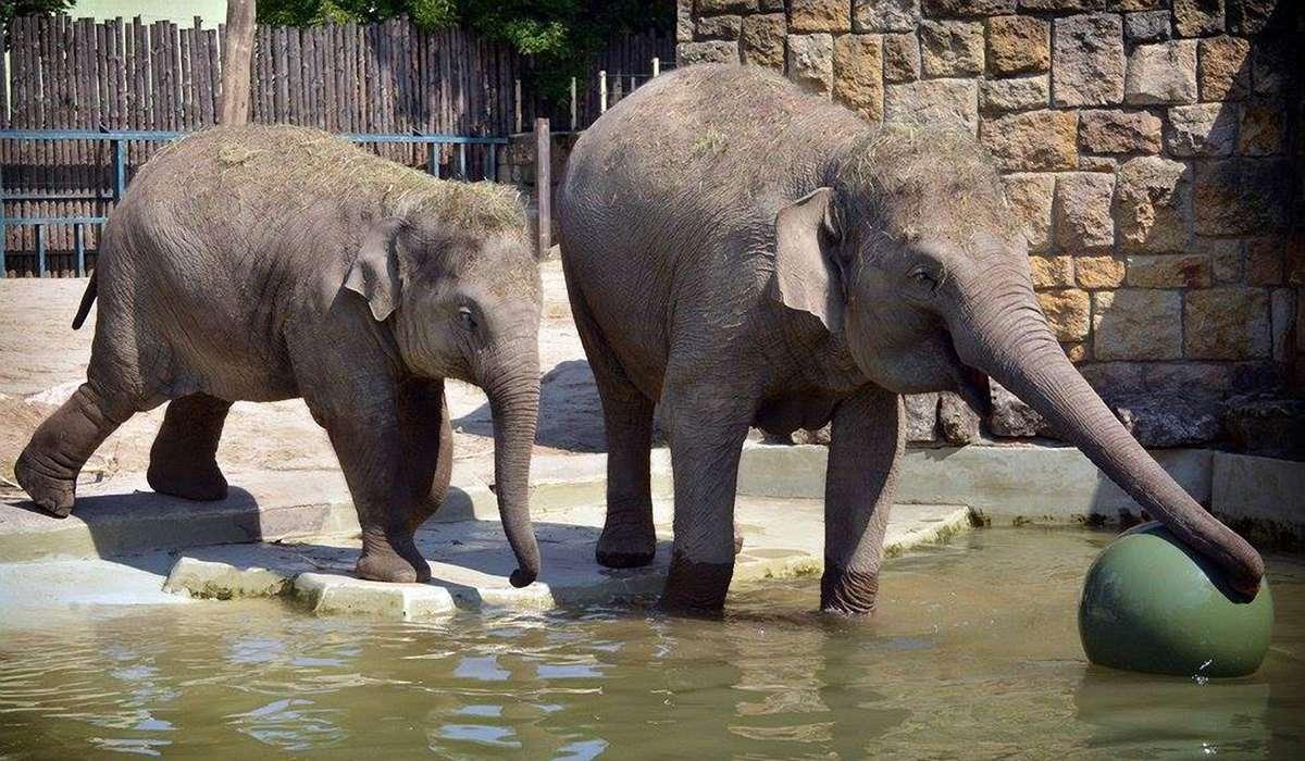 Зоопарк в Будапеште