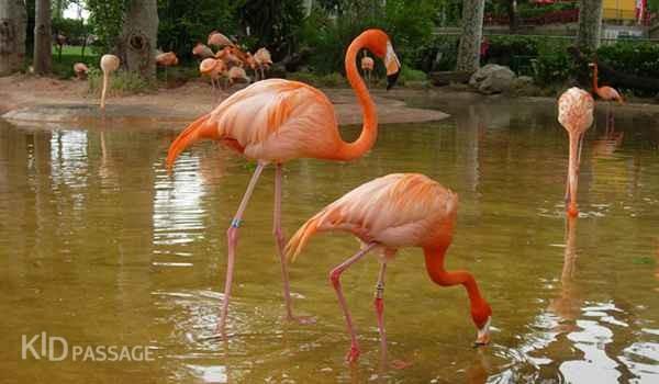 Сколько зоопарков в мире