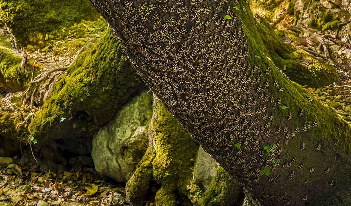 Достопримечательность Родоса Долина бабочек